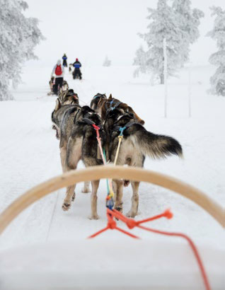 Dogs pulling a rider in the sled