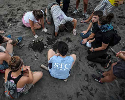 Research assistants and volunteers excavate a nest