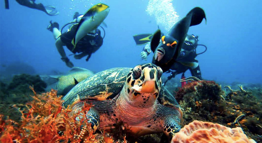 Diving in Cozumel PHOTO: © DEEPBLU