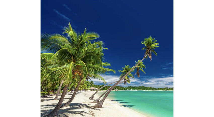 Beach with palm trees over the lagoon