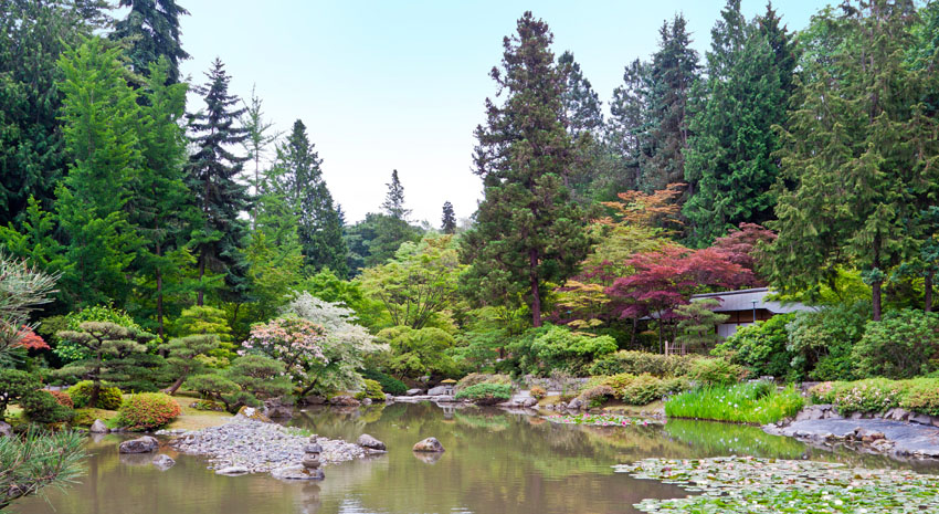 Washington Park Arboretum PHOTO: © ALEXANDRE FAGUNDES DE FAGUNDES | DREAMSTIME.COM