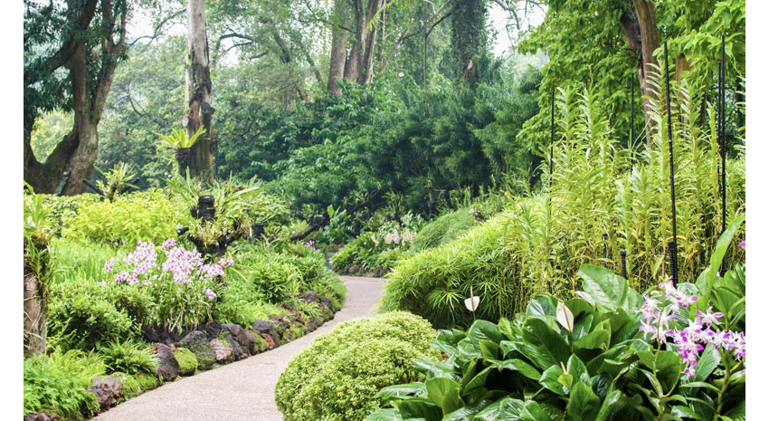 The National Orchid Garden at Singapore Botanic Gardens
