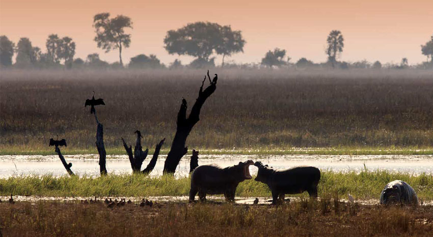 Wildlife in the Okavango Delta in northern Botswana