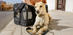 Dog in transport box or bag ready to travel. Arrival, aircraft.