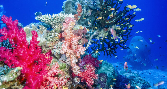 soft coral reefs